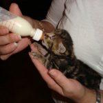 kittenrust